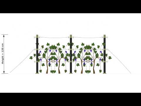 O2-Plant Cordon system-Builder/Level Kit
